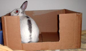 Monet in the 'bunny box'